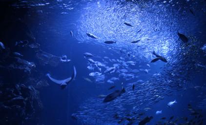 全ての生命は海の恵みから